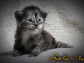 Amelie_19Tage